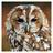 Tawny Owl's avatar