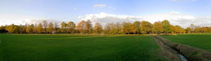 Lime Tree Avenue in Ecclesfield Park