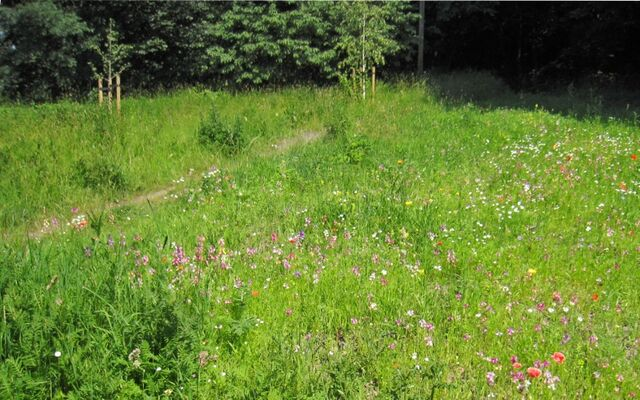 File:St. Marys Lane wild flowers.jpg