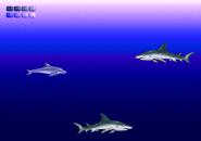 Open Ocean (3)
