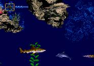 Leopard shark stonefish small orthocone kitnee