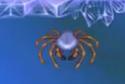 Arctic Spiders