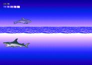 Open Ocean (4)