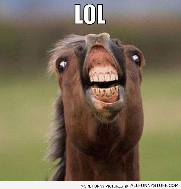 Funny-horse.jpg