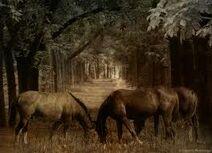 Horseswoods6