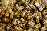 Bees b