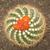 Кактус70897