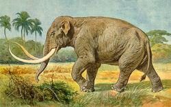 Mammuthus Imperator2