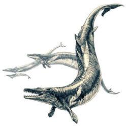 Basilosaurus2