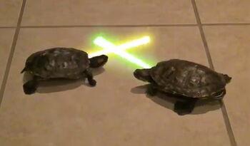 Jedi-turtles
