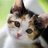 Zedsmeow's avatar