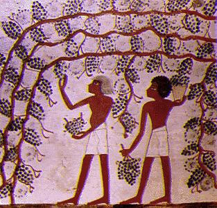 Egypt farmers