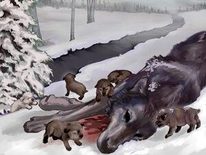 Schattenwolf Welpen Veronica V.Jones FFg