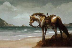Pferd Hochlandpony ZachGraves
