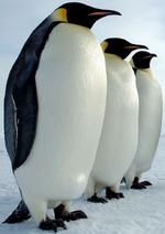 Keisaripingviini 2