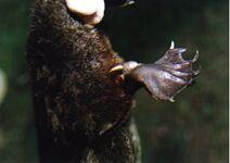 Vesinokkaeläin kannus