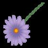 Kwiatek6