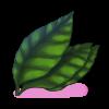 Grandes feuilles