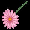 Kwiatek3