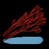 Getrocknete Algen