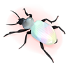 Scarabée Irisé
