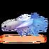 Libellenfisch