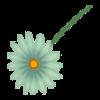 Kwiatek5