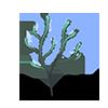 Sprudelnde Alge