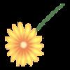 Kwiatek10