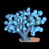 Corail Lumineux