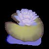 Runde Seerose