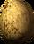 Hawk egg