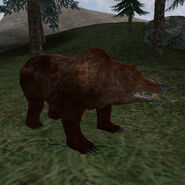 Медведи гризли (TESIIIB)