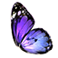 Butterfly Wing.png