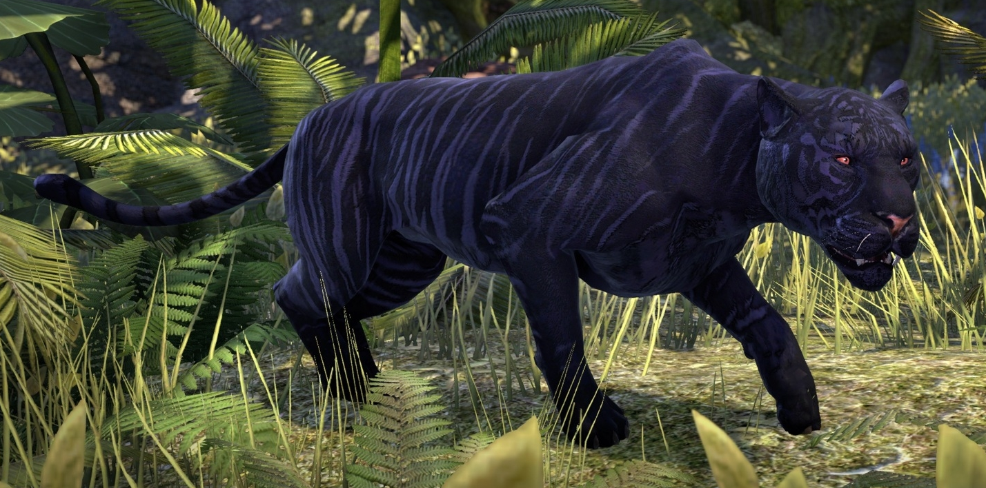 striped senchepanther elder scrolls fandom powered by