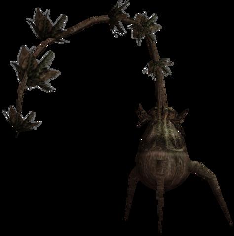 File:Morrowind Bittergreen plant.png