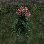 Тимсовые цветы 01