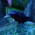 ESO Duke of Crows.png