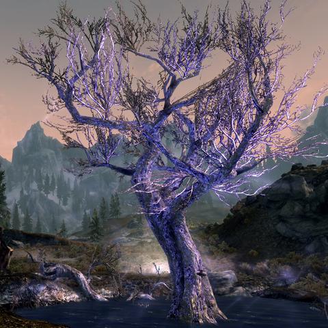 Śpiące drzewo