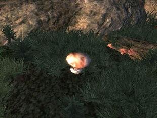 Белый гриб на местности