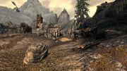 Паровой лагерь - великан и сундук