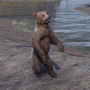 Пещерный медвежонок