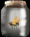 Пчела в банке