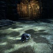Сенчальская полосатая кошка