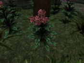 Тимсовые цветы