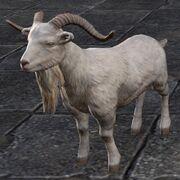 Нинедавский жертвенный козёл
