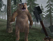 Grizzly Bear Screenshot