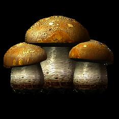 Бесовский гриб