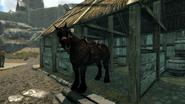 Horse Whiterun Black
