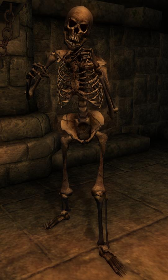 Skeleton (Oblivion) | Elder Scrolls | FANDOM powered by Wikia